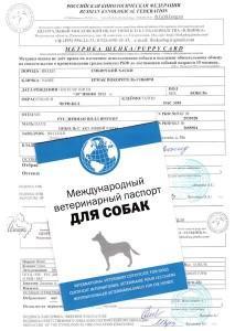 Документы собаки