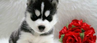 puppies from Darina