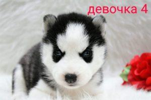 puppies from Darina