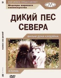 Дикий пес Севера