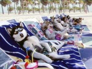 Хаски на пляже