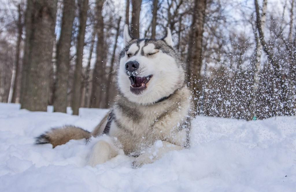 Янк Снежное Чудо